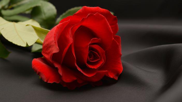 """""""A neved napján gratulálok neked! Virágot hoztam - meg egy üzenetet, Amelyben benne él Ezernyi szép emlék!"""" Dalszöveg"""