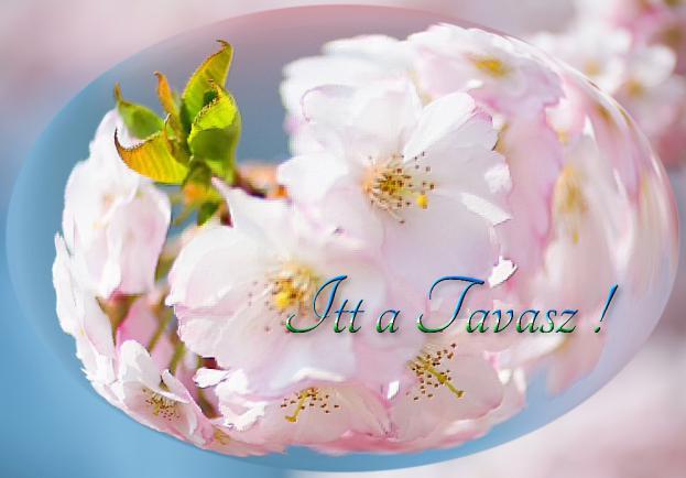 Tavaszi tisztítókúrák | Itt a TAVASZ !